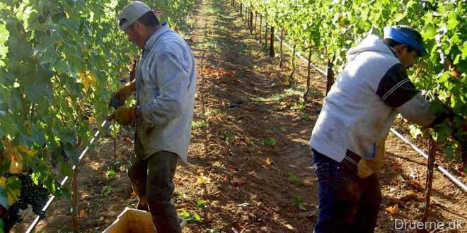 2012 leverer den laveste vin produktion i 37 år