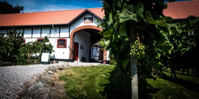 Besøg hos Alstrup Vin på Samsø